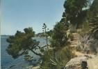 Toulon - Cap Brun - Le Sentier Des Douaniers - CPM - Toulon