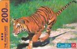Phonecard Cardex 96 Tiger (Mint,New) Only 1000 EX Rare ! - [2] Prepaid- Und Aufladkarten