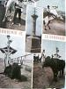 FRANCE  CAMARGUE  VUES CHEVAUX CAVALLI HORSES  E TORO VB1972 DQ6824 - Saintes Maries De La Mer
