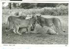 UGANDA  / SAN MARINO -POSTCARD WHITE BLACK AFRICAN WILD LIFE - Uganda