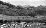 Carte Photo Dentelee ENNEY( Camping Tcs Et Chaine Des Vanils) 1973 HTE GRUYERE - Schweiz