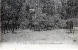 "SAINT LOUIS DU RHONE  ""chevaux Camargues"" - Saint-Louis-du-Rhône"