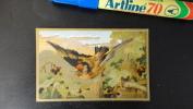 12F - Chromos Papier Rigide Ancien Oiseaux Volatiles Chardonneret - Autres