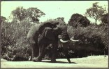 """""""South African Elephant"""",  Posted In S.A. 1939 - Elephants"""