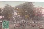 20161 Japan Japon  Plaing Deers At Nara Park .  ! état ! Chevreuil Daim - Japon
