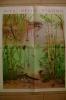 C0572 - Inserto Scuola It.Moderna 1956 - MANIFESTO Illustrato GB.Bertelli - VITA NELLO STAGNO - Posters