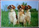TROIS CHIENS EPAGNEULS BRETON - ED CARTOLASER AU RAYON LASER PHOTO LACZ LEMOINE - CORRECTE - Dogs