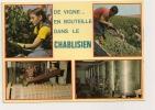 11004 - CHABLIS (YONNE) LES VENDANGES - VIGNES - Chablis