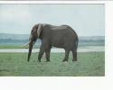 Portugal Cor 16897 - MOÇAMBIQUE MOZAMBIQUE - GORONGOZA - ELEFANTE ELEPHANT - Mozambique