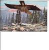 Eagle Hawk Real Feathers - Oiseaux