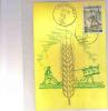 CARTE MAXIMUM  BELGIQUE   CAMPAGNE CONTRE LA FAIN N° 1243 - Maximum Cards