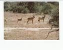 Portugal Cor 16916 - MOÇAMBIQUE MOZAMBIQUE - GORONGOSA - ANIMALS - GONDONGAS HARTEBEEST - Mozambique