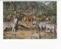 Portugal Cor 16917 - MOÇAMBIQUE MOZAMBIQUE - GORONGOSA - ANIMALS - ZEBRAS E ELANDES - Mozambique