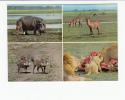 Portugal Cor 16921 - MOÇAMBIQUE MOZAMBIQUE - GORONGOSA - ANIMALS - HIPOPOTAMO HIPO LION LEÃO - Mozambique