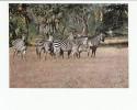 Portugal Cor 16923 - MOÇAMBIQUE MOZAMBIQUE - GORONGOSA - ANIMALS - ZEBRAS - Mozambique
