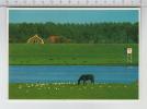 De Lek Bij Culemborg - Cheval / Pferd / Horse / Cavallo - Paarden