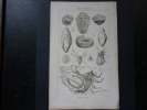 Gravure Ancienne De H. Roux Ainé, 14,5x23cm. Histoire Naturelle ; Animaux Fossiles - Minerales & Fósiles