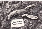 20372 En Vacances ; 964 Chapeau Nantes France . Homard J'en Pince Pour Vous - Crustace - Animaux & Faune