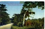 Plantation De Cannes à Sucre Porto Rico - Vereinigte Staaten