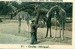 CHROMO OFFERTE PAR CARRIERE ET RENARD..ROUEN...GIRAFES  (AFRIQUE) - Cromos