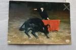 Corrida - Pays Basque - Course De Vache Landaie - Charlotade - Corrida