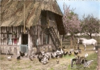 Ferme Normande - Fermes