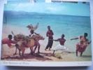 Jamaica People With Donkey - Jamaica