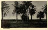 Deutsch Südwestafrika - Palmenlandschaft - Namibia
