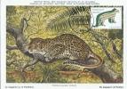 D05967 CARTE MAXIMUM CARD 2011 NETHERLANDS - LEOPARD CP MUSEE ORIGINAL - Big Cats (cats Of Prey)