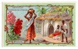 Chromo Pour Guérin Boutron, Thèmes: Fleur Phlox, Congo, Afrique - Guerin Boutron