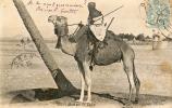 Mebari Monté Par Un Targui - Algerije