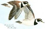 Illustrateur-d´après Gouache De Nicolas De Rainvilliers-Grands Gravelots- NR 12 (3) (oiseau-oiseaux-Gravelot) - Other Illustrators