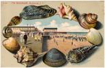 AK THE BOARDWALK  ARVERNE LONG ISLAND  SEA SHELLS OLD POSTCARD Relief - Long Island
