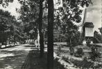 Kasterlee :   Oude Standaardmolen     ( Groot Formaat  Geschreven Met Zegel ) - Kasterlee