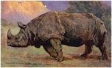 AK RHINOZEROS INDIAN RHINOCEROS  RHINOCEROS INDICUS  EDGAR H. FISHER OLD POSTCARD - Rhinocéros