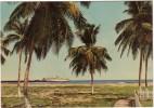 CPSM - HONDURAS - TELA - Vue De La Côte Nord - Cargo Vraquier - Coul - Ann 70 - - Honduras