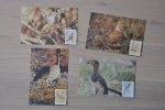 POSTCARD SWA SOUTH WEST AFRICA  ++ BIRDS OISEAU VOGELS - Africa Del Sud-Ovest (1923-1990)