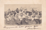 CARD GATTI  CON CAMPANELLINO SORRIDENTI   1902   -FP-V-2-  -0882-13284 - Gatos