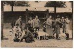 94 - Val De Marne / ECOLE (vétérinaire) D´ALFORT -- Cour Du Service De Pathologie Bovine (vache, Mouton, Chèvre, Bouc) - Alfortville