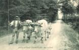 71 Attelage De Booeufs CHAROLLAIS Dans La Forêt - France