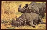Cpa Rhinoceros Unicornis Indishes Nashorn     LOU10 - Rhinocéros