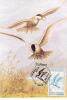 FISH PREY BIRD, 1992, CM. MAXI CARD, CARTES MAXIMUM, ROMANIA - Aigles & Rapaces Diurnes