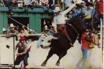 Calgary Exhibition And Stampede Brahma Bull Riding - Calgary