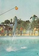 "MARINELAND - Dauphins ""Lucky Et Splash"". Ed. Mic Max N° 1 - Antibes"