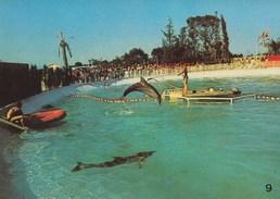 "MARINELAND - Dauphin ""Splash"" Sautant. Ed. Mic Max N° 9 - Antibes"