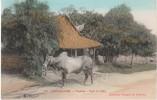 Cochinchine French Colony Zebu Cattle Native Village, C1910s Vintage Postcard - Vietnam