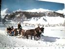 SLITTA  CON CAVALLI HORSE  SUISSE  CELERINA  VB1979 DR9618 - Taxi & Carrozzelle