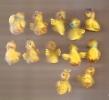 Serie Des Petits Canard Boite De 36 Pcs - Birds - Ducks