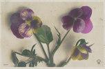 Pensées - Fleurs, Plantes & Arbres