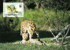 BURUNDI 1992 MICHEL No: 1760 Maximimcard - Big Cats (cats Of Prey)